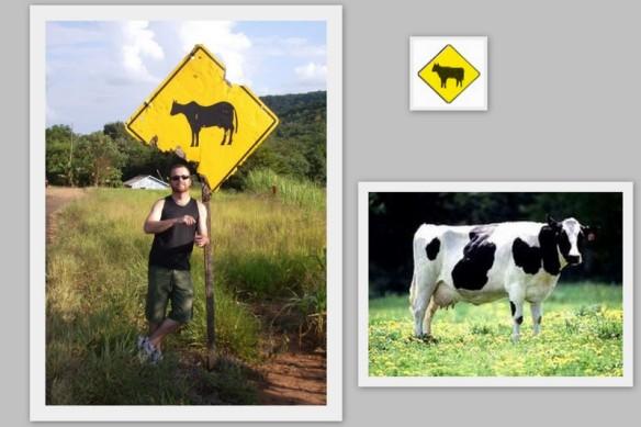 Vander e as vacas.