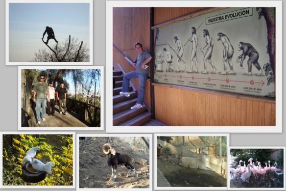 Mais bichos do Zoológico e o Wagão fazendo parte da evolução humana. (22/05/2009)