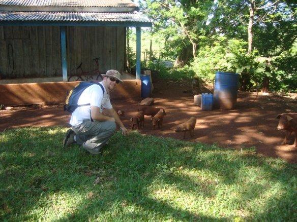 Brincando com os porquinhos. (10/10/2009)
