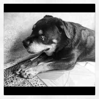 O velho Jack. (dez/2012)