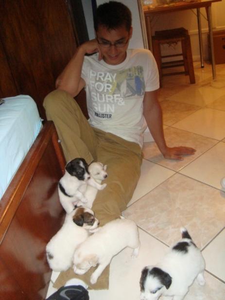 dogs-janeiro-2010-15