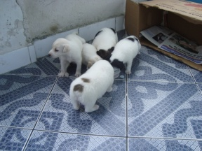 dogs-janeiro-2010-17