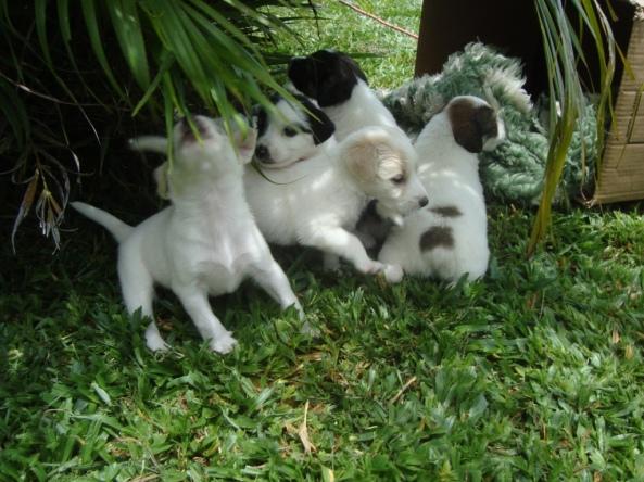 dogs-janeiro-2010-23