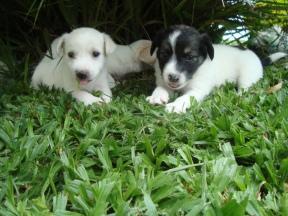dogs-janeiro-2010-34