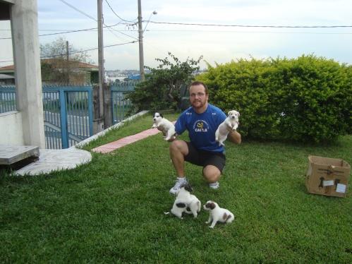 dogs-janeiro-2010-43