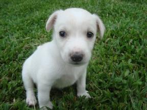 dogs-janeiro-2010-51
